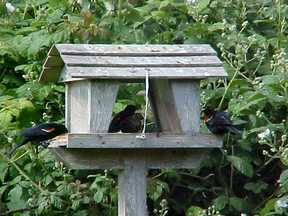 birds-at-feeder1.jpg