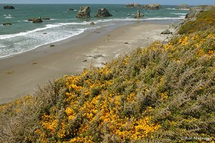 oregon-coast1.jpg