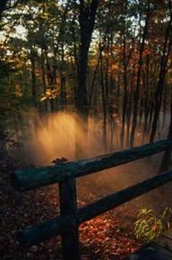 autumn-forrest-2.jpg